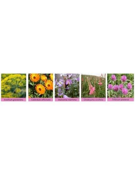 Banda Floral Néctar y Polen (2) 100g Melíferas porte medio, para hileras entre cultivos