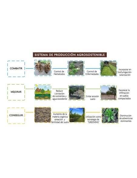 Semillas Ecológicas Planta Biocida Nematodos (Raphanus Sativus) 1Kg. Abono verde