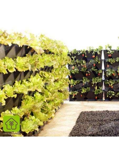 Jardín vertical Minigarden Negro MiniGarden - 6