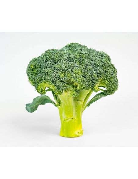 3u. Plantel Ecológico Bróculi