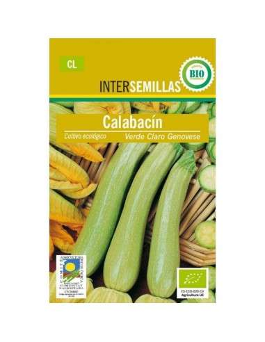 Calabacín Verde Claro Genovese Ecológicas