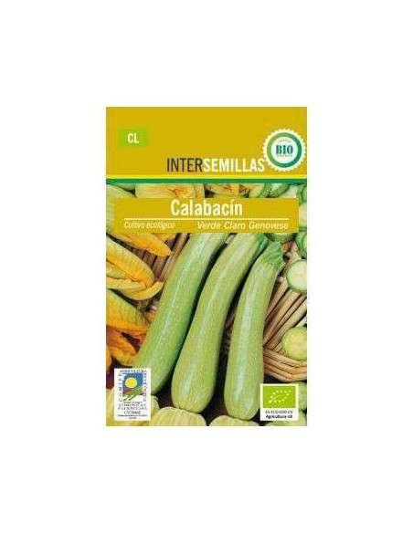 Semillas de Calabacín Verde Claro Genovese Ecológicas INTERSEMILLAS - 2