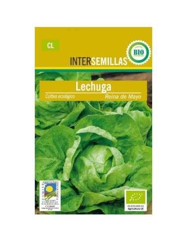 Semillas de Lechuga Reina de Mayo Ecológicas INTERSEMILLAS - 1
