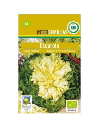 Semillas de Escarola Gigante del Hortelano INTERSEMILLAS - 1