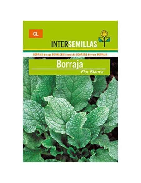 Semillas de Borraja Flor Blanca 10gr. INTERSEMILLAS - 1