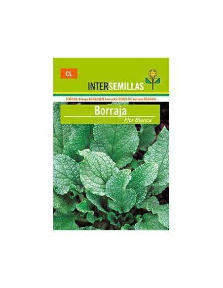 Semillas de Borraja Flor Blanca 10gr. INTERSEMILLAS - 2