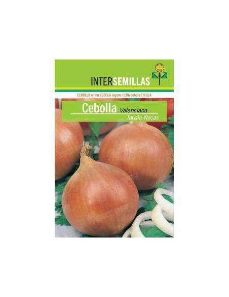 Semillas de Cebolla Valenciana Tardía Recas 7gr. INTERSEMILLAS - 2