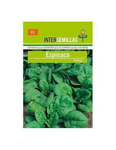 Semillas de Espinaca Viking 10gr. INTERSEMILLAS - 1