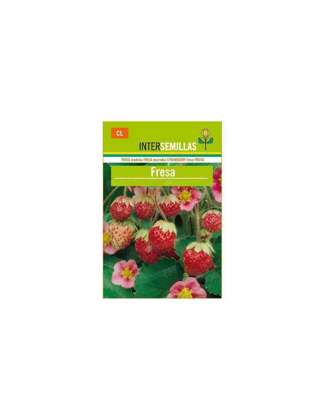 semillas de fresa