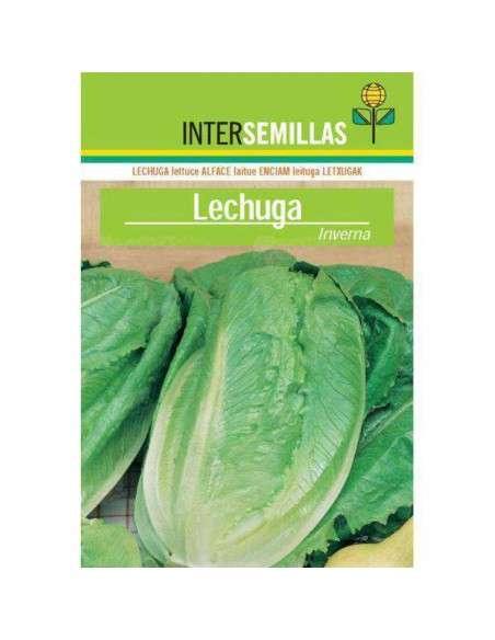 Semillas de Lechuga Inverna 8gr. INTERSEMILLAS - 1