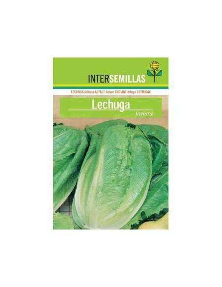 Semillas de Lechuga Inverna 8gr. INTERSEMILLAS - 2
