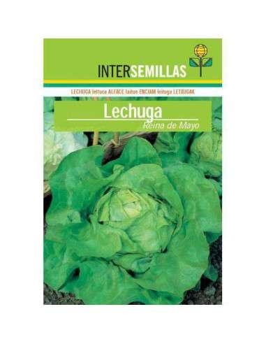 Semillas de Lechuga Reina de Mayo 8gr. INTERSEMILLAS - 1