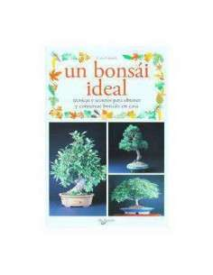 Un Bonsai Ideal De Vecchi - 47