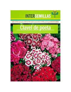 Semillas de Clavel del Poeta INTERSEMILLAS - 1
