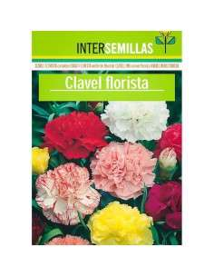 Semillas de Clavel Florista INTERSEMILLAS - 1