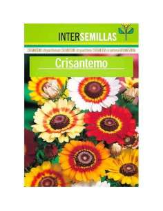 Semillas de Crisantemo INTERSEMILLAS - 1