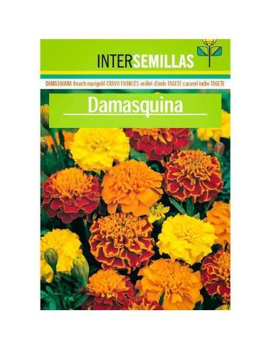 Semillas de Damasquina INTERSEMILLAS - 1