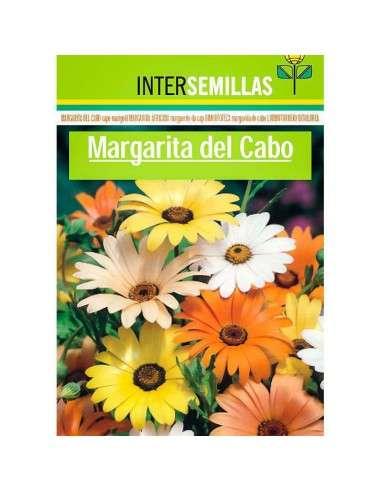 Margarita del Cabo