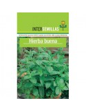 Semillas Hierba Buena Mentha Spicata.