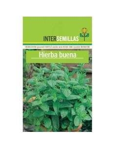 Semillas de Hierba Buena Mentha Spicata.