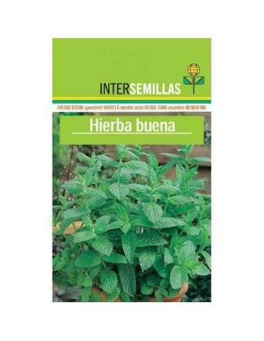 Semillas de Hierba Buena Mentha Spicata. INTERSEMILLAS - 1