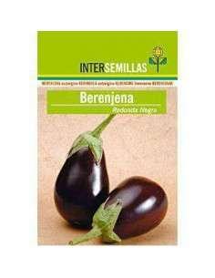 Semillas de Berenjena Redonda Negra 4g INTERSEMILLAS - 1