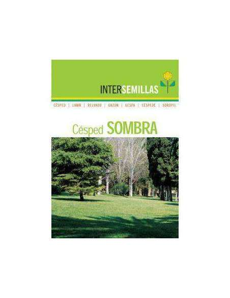 Semillas de Césped Sombra 1Kg. INTERSEMILLAS - 2