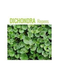Semillas de Dichondra Repens 1Kg.