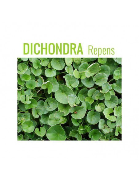 Semillas de Dichondra Repens 1Kg. INTERSEMILLAS - 1