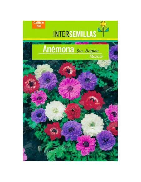 Bulbos Anemona Sta. Brigida Mezcla 8 ud. INTERSEMILLAS - 2