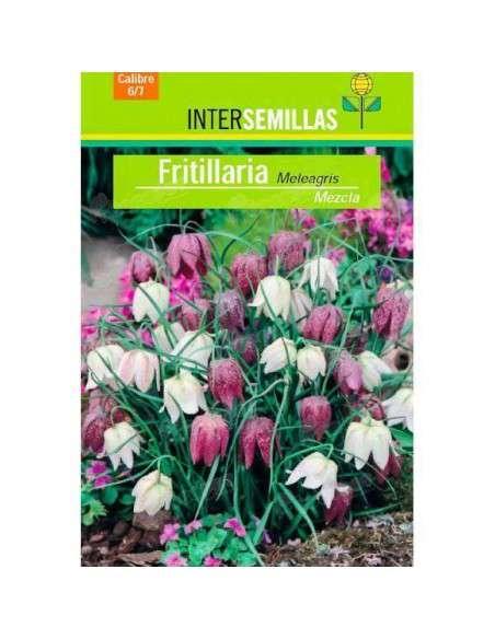Bulbos Fritillaria Meleagris Mezcla 5 ud. INTERSEMILLAS - 2