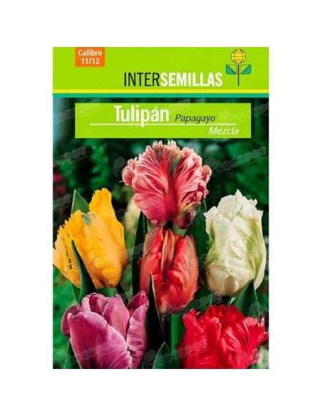 Bulbos Tulipán Papagayo Mezcla 3 ud. INTERSEMILLAS - 2