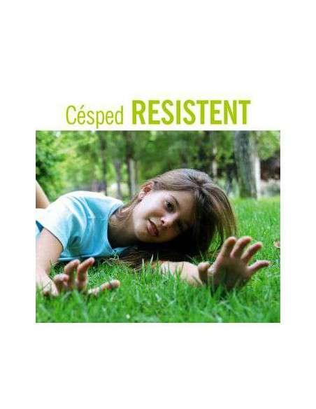 Semillas de Césped Resistent 5Kg. INTERSEMILLAS - 1