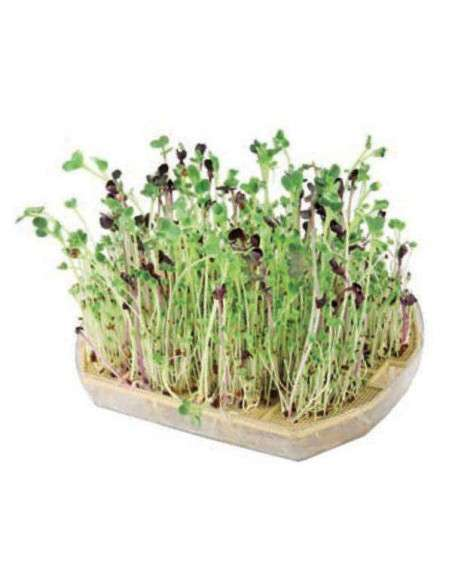 Semillas Brotes de Alfalfa Semillas Batlle - 3
