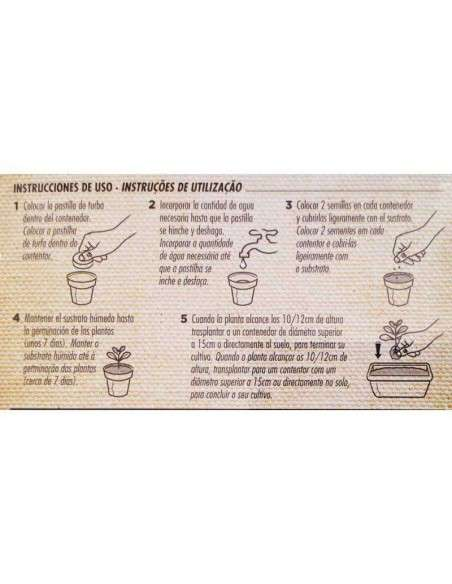 Stevia Kit de Cultivo Fácil Semillas Batlle - 3