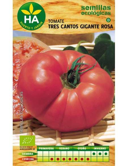 Semillas Tomate Tres Cantos Gigante Rosa Semillas Batlle - 1