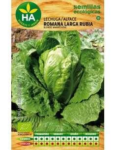 Semillas de Lechuga Romana Ecológicas