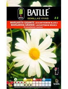 Semillas de Margarita Gigante blanca
