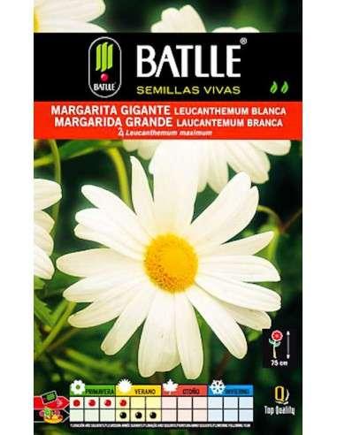 Semillas de Margarita Gigante blanca Semillas Batlle - 1