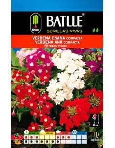 Semillas de Verbena ENANA compacta Semillas Batlle - 1