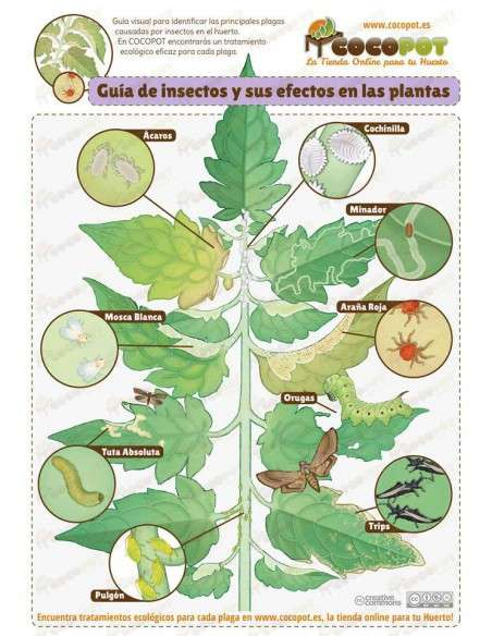 Plagas y Enfermedades en Hortalizas y Frutales La Fertilidad de la Tierra - 2