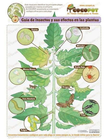 Insecticida Biológico sobre (5 litros) Semillas Batlle - 2