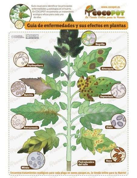 Fungicida Ecológico 250ml Trabe - 2