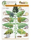 Fungicida Hongo Trichoderma 30 plantas