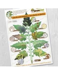 Lámina Guía Enfermedades Huerto COCOPOT - 1
