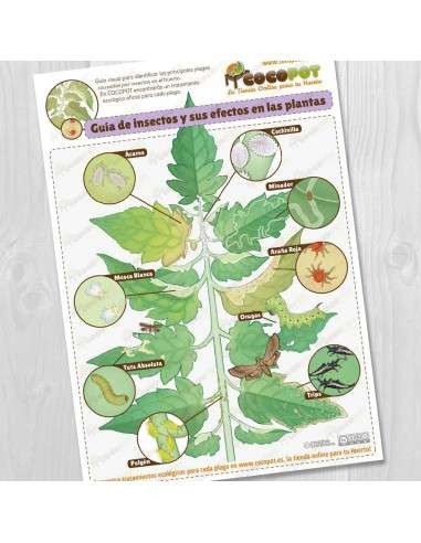 Lámina Guía Plagas del Huerto COCOPOT - 1
