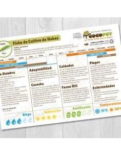 Guía Cultivo de Habas COCOPOT - 5