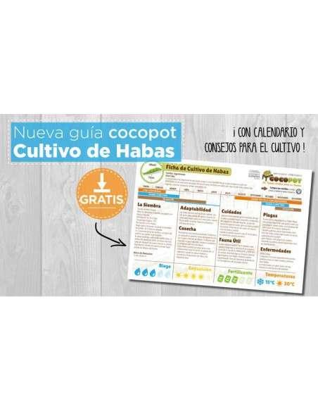 Guía Cultivo de Habas COCOPOT - 6