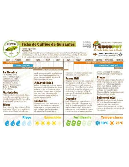Semillas de Guisante Enrame Capuchino 100g. Semillas Batlle - 2