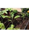 KIT de riego para mesa de cultivo